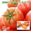 静岡産アメーラトマト秀品9〜16個(約1