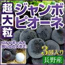 長野産【超大粒】ジャンボピオーネ(種なし)3房セット(2.25キロ以上)