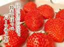 静岡産紅ほっぺいちご特大サイズ(12or15粒入)