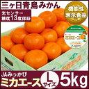 三ヶ日青島みかん【特選品】ミカエースLサイズ5キロ(三ケ日みかん)