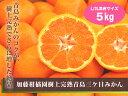 【加藤柑橘園】樹上完熟青島三ケ日みかん5kg L/2L混合サイズ【三ケ日青島みかん】
