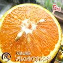 みかん 訳あり 和歌山県産 バレンシアオレンジ 5kg 送料無料 (一部地域除く) 柑橘 果物 フルーツ みかん ※サイズ混合 (約25玉~40玉)