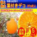 和歌山紀南の 樹上熟成 葉付き デコ ( 不知火 ) 5kg (約18玉〜26玉) 10kg (約36玉〜52玉)《 訳あり 》 デコポン と同一品種 ノーワックス ご家庭用 濃厚 産直 高糖度