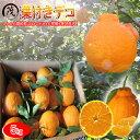 樹上熟成葉付き デコ ( 不知火 ) 5kg (約20玉〜30玉) 訳あり 送料無料(一部地域除く) デコポン と同一品種