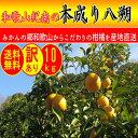 【 送料無料 】《 訳あり 》 和歌山県紀南の 木成り 八朔 10kg ご家庭用 はっさく 濃厚 産直 ジューシー
