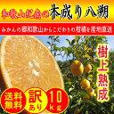 【あす楽対応】和歌山県紀南の 木成り 八朔 10kg (約2...