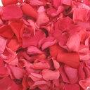 バラの花びら  ダークピンク