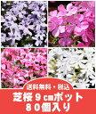 【送料無料】芝桜(シバザクラ)80個入り選べる2品種(40個×2品種)