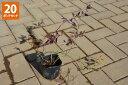 【20ポットセット】【送料無料】「ツルハナナス(蔓花茄子)」 ポット直径9.0cmポット
