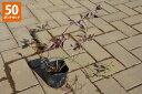 【50ポットセット】【送料無料】「ツルハナナス(蔓花茄子)」 ポット直径9.0cmポット