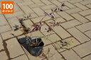 【100ポットセット】【送料無料】「ツルハナナス(蔓花茄子)」 ポット直径9.0cmポット