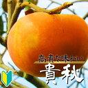 【産地直送】おいしい新品種の赤柿「貴秋(きしゅう)」樹高1.0m程度2年生