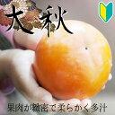 【柿苗木】【2年生苗】太秋 高さ0.7〜1.0m