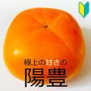 【柿苗木】【2年生苗】陽豊(ようほう) 高さ0.7〜1.0m