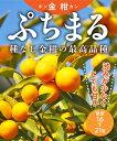 【柑橘苗木】金柑(キンカン)「ぷちまる」 2年生 高さ70cm〜1.0m