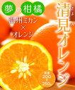 【柑橘苗木】清見オレンジ 2年生 高さ70cm〜1.0m