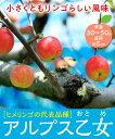 【リンゴ苗木】アルプス乙女 2年生 高さ70cm〜1.0m