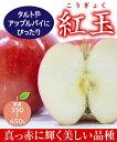 【リンゴ苗木】紅玉(こうぎょく) 2年生 高さ70cm〜1.0m