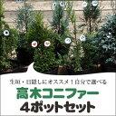 【送料無料】生垣・目隠しにオススメ!自分で選べる高木コニファー 4ポットセット