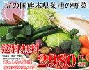 Yasai01-h10