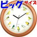 壁掛け時計 小さな野鳥の大きな壁掛け時計 野鳥 トリ 鳴き声 さえずり 壁掛け 時計 カッコウ ルリ