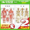 「検査」医道の日本社 人体解剖学チャート骨格筋 ポスター 2枚セット(骨格筋・骨格) パネルなし+さらに選べるおまけ付き