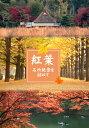 紅葉 名所絶景を訪ねて 国営昭和記念公園(東京)【動画配信】