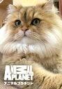 にゃんこの城 〜ネコがカワイイ!100の理由〜 第7話【動画配信】