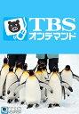 びっくり!どうぶつ大百科【TBSオンデマンド】 〜旭山動物園編〜【動画配信】