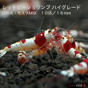 レッドビーシュリンプ ハイグレード 日の丸 ・モスラミックス 10匹セット(1匹/16mm前後)