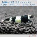 【蝦蟇のえび】ブラックシャドーシュリンプ パンダ  Aグレード 1匹/15〜18mm