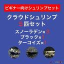 【クラウド5匹セット】スノーラデン3匹+クラウドブラック1匹+クラウドターコイズ1匹