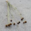 ヘレニウム ロリポップ / ドライフラワー 花材 リース 手作り 材料 素材 ナチュラル インテリア ディスプレイ シック シンプル 黄色 ブラウン