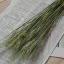 ハルユタカ麦 / コムギ 小麦 はるゆたか / 北海道産 ドライフラワー 花材 リース 手作り 国産