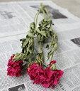 シャクヤク ピンクレッド / しゃくやく 芍薬 / 北海道産ドライフラワー 花材 リース 手作り 国産 材料 素材 ナチュラル インテリア ディスプレイ