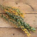 ドライフラワーミモザ / 花材 リース 手作り 国産 材料 素材 ナチュラル インテリア