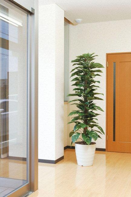 【送料無料♪】ジャイアントポトス (人工観葉植物) 高さ180cm 光触媒 (145A350) 【人工観葉植物・造花・フェイクグリーン/フロア(鉢型)用 人工観葉植物(光触媒 )】 みずみずしいグリーンが心地よいオアシス空間を演出します !