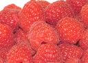 甘酸っぱくて香り豊か!冷凍していないフレッシュなラズベリーをお届けします。7月下旬発送開始!甘酸っぱいラズベリー(キイチゴ)生果実 500g