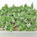 北海道産 天然ヨモギ(100g)×1個発送期間 5月上旬〜6月下旬