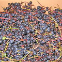 北海道産天然ヤマブドウ(2Kg)×2箱 (山ぶどう 山ブドウ 山葡萄)送料無料発送期間 9月下