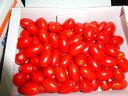 豊橋産 高糖度フルーツミニトマト あまえぎみクレア(赤)1kg