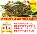 カニ!超新鮮!獲れたての活き締めワタリガニ(メス)特大1尾(450g以上)びっくりするほど大きいサイズ!