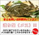 ワタリガニメス超新鮮!獲れたての活き締めメスワタリガニ 約1.2kg(200g〜400gサイズが3〜7尾入り)まとめ買い【送料無料】