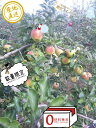 【お歳暮ギフト】に幻の黄色いりんご!贈答用葉とらず樹上完熟【...