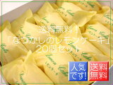 !なつかしの レモンケーキ20個セット【smtb-k】【ky】 【7名以上向け】 【楽ギフ包装】 【楽ギフのし】 【楽ギフのし宛書】 【楽ギフメッセ入力】 【御供え】 【内祝い】