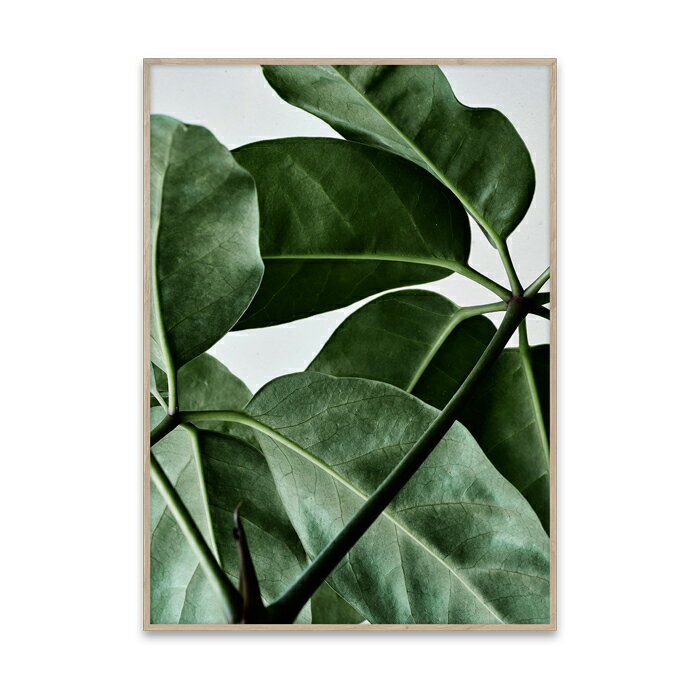 RoomClip商品情報 - 【ポスター】GREEN HOME 01 ポスター 50cm×70cm / PAPER COLLECTIVE