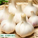 バラ詰め乾燥にんにく M〜Lサイズ 6kg(福岡県 たなかふぁーむ)無農薬野菜・送料無料・産地直送