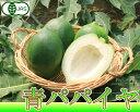 青パパイヤ (野菜) 2kg (沖縄県 熱帯資源植物研究所) 有機JAS 有機野菜 無農薬 パパイヤ 送料無料 産地直送 02P24Oct15