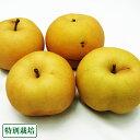 南水 B品3kg(長野県 さんさんファーム) 特別栽培 減農薬洋 梨 減農薬 無化学肥料 送料無料