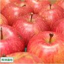 弘前ふじ 訳あり10kg箱(28〜46玉)(青森県 さいとうりんご園)特別栽培 減農薬りんご・送料無料・産地直送・お徳用・規格外